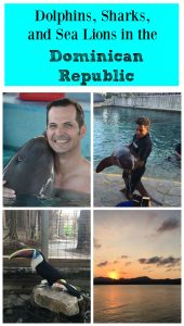 Dolphins, Sharks and Sea Lions in the Dominican Republic