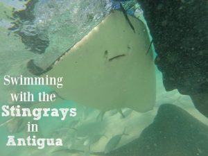 Swimming With Stingrays in Antigua